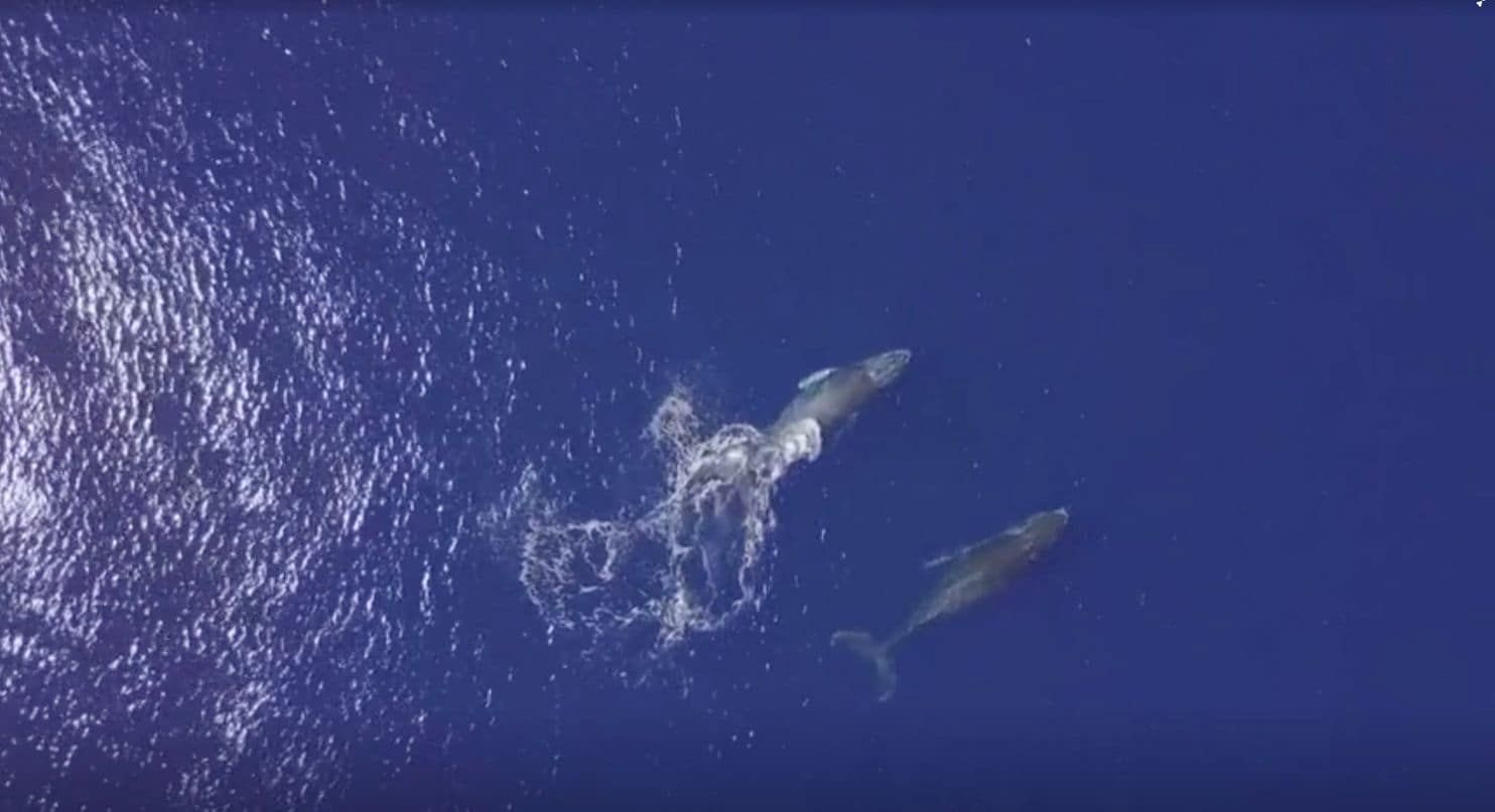Whales Go Quiet And Dolphins Shout In Loud Oceans New