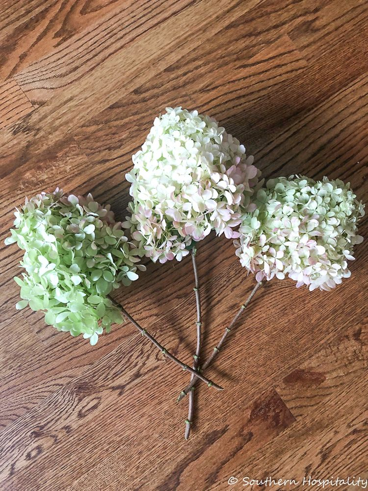 How To Dry Limelight Hydrangeas Southern Hospitality Limelight Hydrangea Hydrangea Not Blooming Hydrangea
