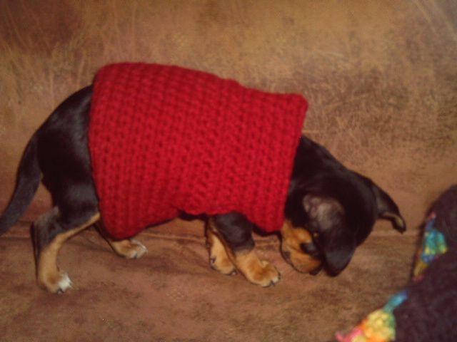 Dog Sweater Free Crochet Pattern Courtesy of Crochet N More | Z ...