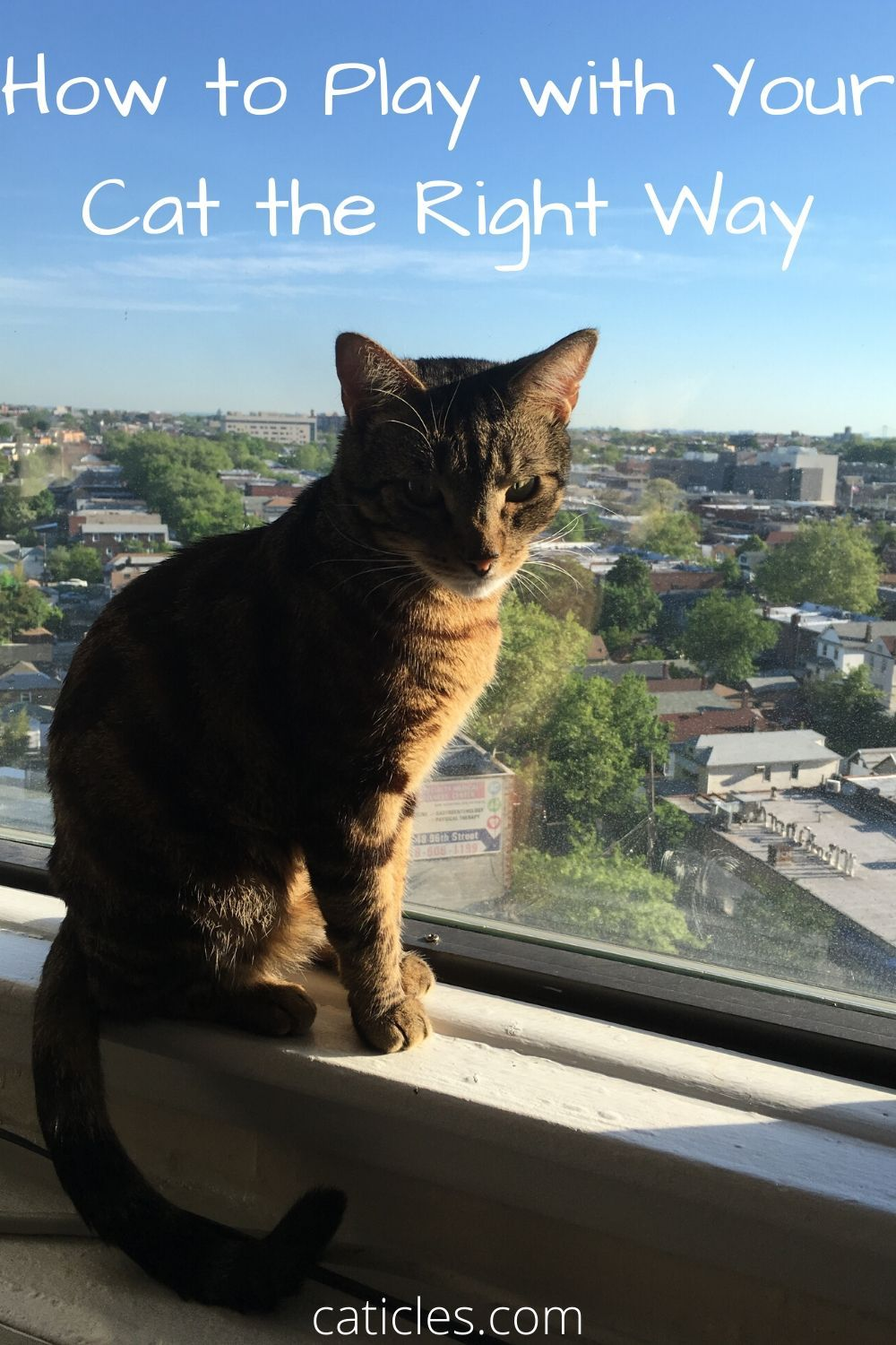 My Cat Isn't Interested in Playing Here Are 5 Easy Tricks