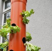 Photo of Vertical gardening on the gallery of the lettuce workshop on – My blog …