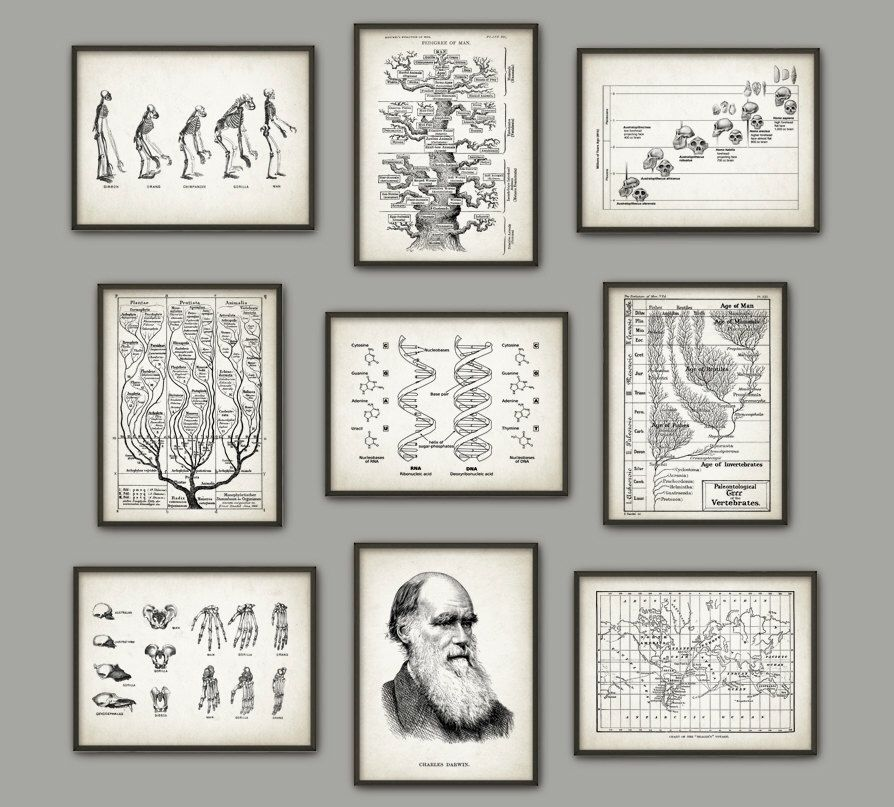 Evolution Wall Art Print Set of 9 - Biology Wall Art - Charles Darwin DNA Tree of Life Apes Skeletons Poster Set - Biology Student Gift Idea by QuantumPrints on Etsy https://www.etsy.com/listing/239003205/evolution-wall-art-print-set-of-9
