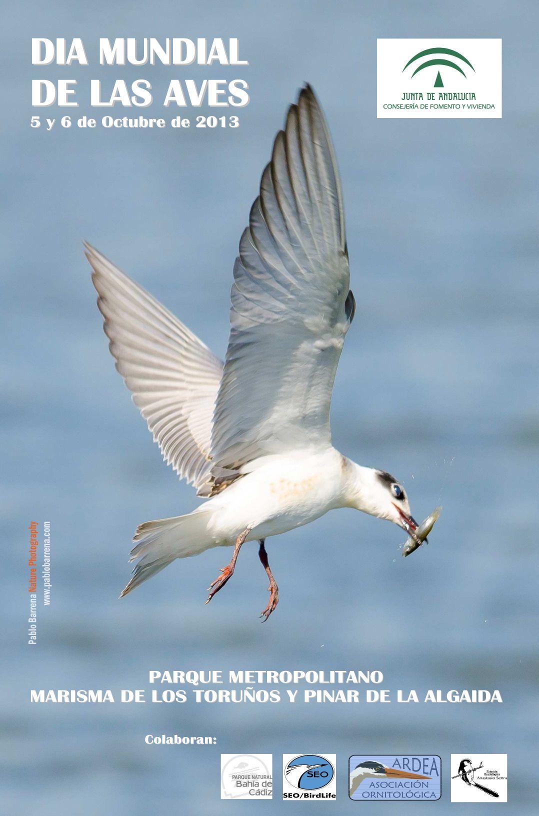 Como cada año, vuelve el Día Mundial de las Aves al Parque Metropolitano de Los Toruños con multitud de actividades.