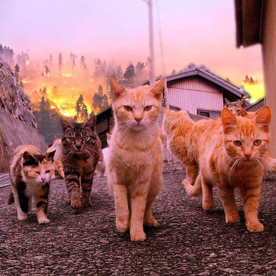 Cat Gang Pics Cats Cute Animals Cute Cats