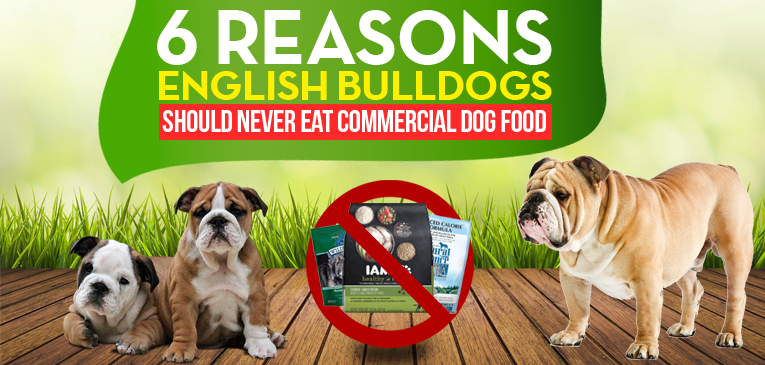 6 Reasons English Bulldogs Should Never Eat Commercial Dog