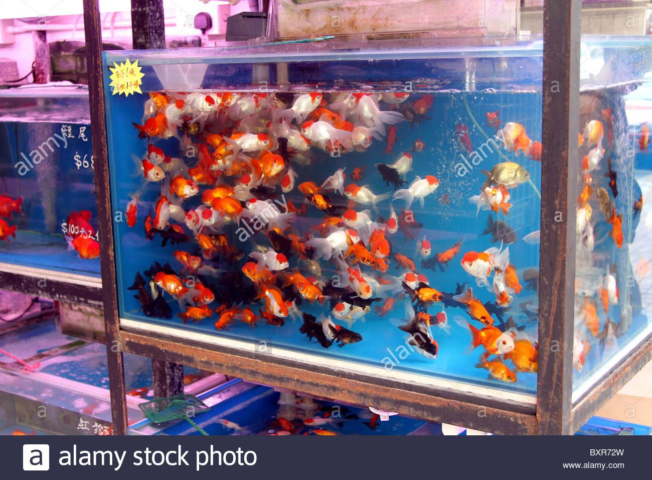 Aquarium Pet Shop Selling Goldfish In Plastic Bags In The Fish Market Area On Tung Choi Street In Kowloon Hong Kong China Pet Shop Goldfish Pets