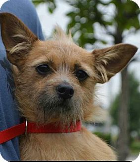 Terrier Unknown Type Small Mix Dog For Adoption In Schaumburg Illinois Polly Pets Dog Adoption Pet Adoption