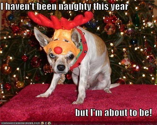 Christmas Dog Joke Funny Dog Christmas Pictures Christmas