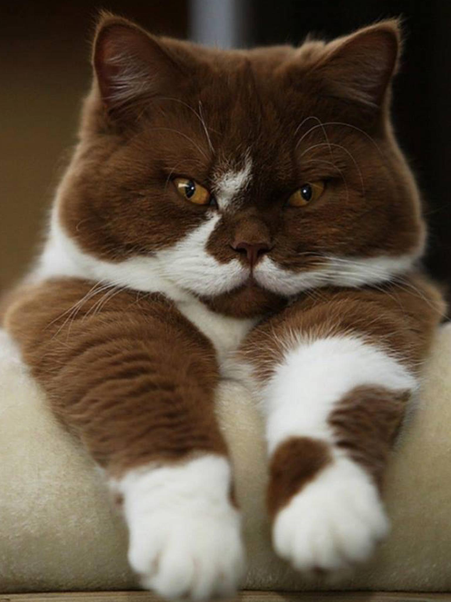 gorgeous, gorgeous, gorgeous | kittens | pinterest | funny pets