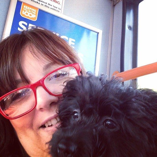 My first bus ride. #pom #puppy #primrose #puppypal #Pomeranian #primrosethedog #dog #doggy #dogs_of_instagram #mom #mummy #maltese #maltipom #intagramdogs #intagrampets #instagrampuppy