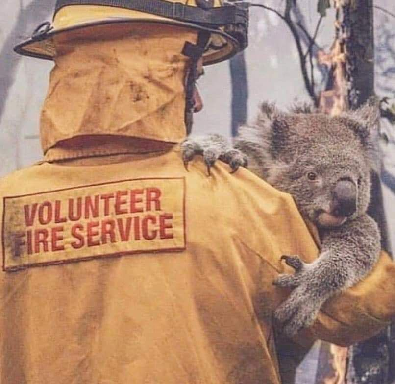 May God Bless Australia All Sentient Beings In 2020 Koala Australia Animals Koalas