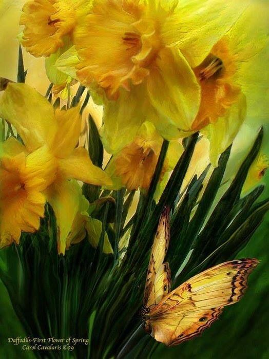 Narcisos First Flowers Of Spring Oil Painting Nature Daffodils