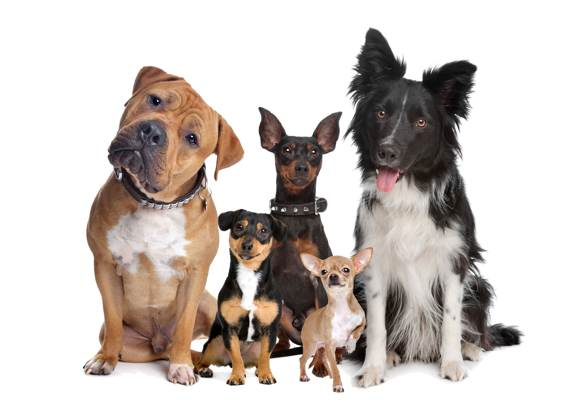All About Dogs Faq Included In 2020 Pitbull Puppy Care Pet People Most Popular Dog Breeds