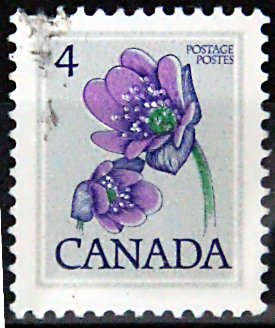 Canada. HEPATICA.  Scott 709 A355, Issued 1977, 4c,  Lithogravure & Engraved, Perf. 12 x 12 1/2.