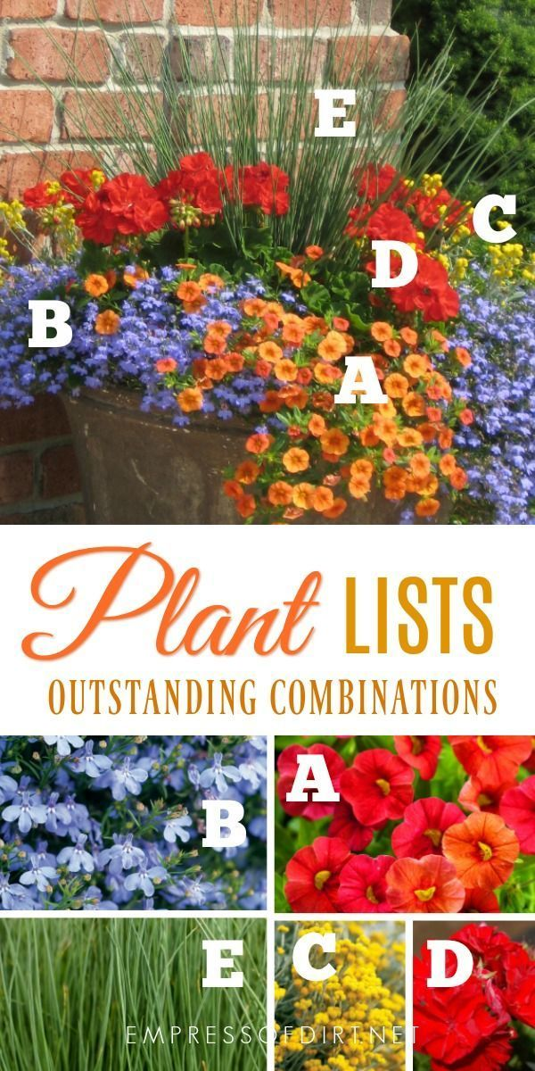 Plant Ideas for Beautiful Patio Containers  1 of 3  Empress of Dirt  Plant lists for beautiful patio containers Image by Proven Winners
