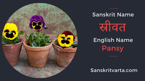 50 List Of Flowers Name In Sanskrit Language And Hindi With Pictures Sanskrit Learnsanskrit Sanskritvarta Flowe In 2020 Sanskrit Sanskrit Names Sanskrit Language
