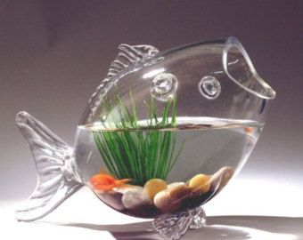 Strange Fish Shaped Glass Fish Bowl Aquarium Air Plant Centerpiece Interior Design Ideas Philsoteloinfo