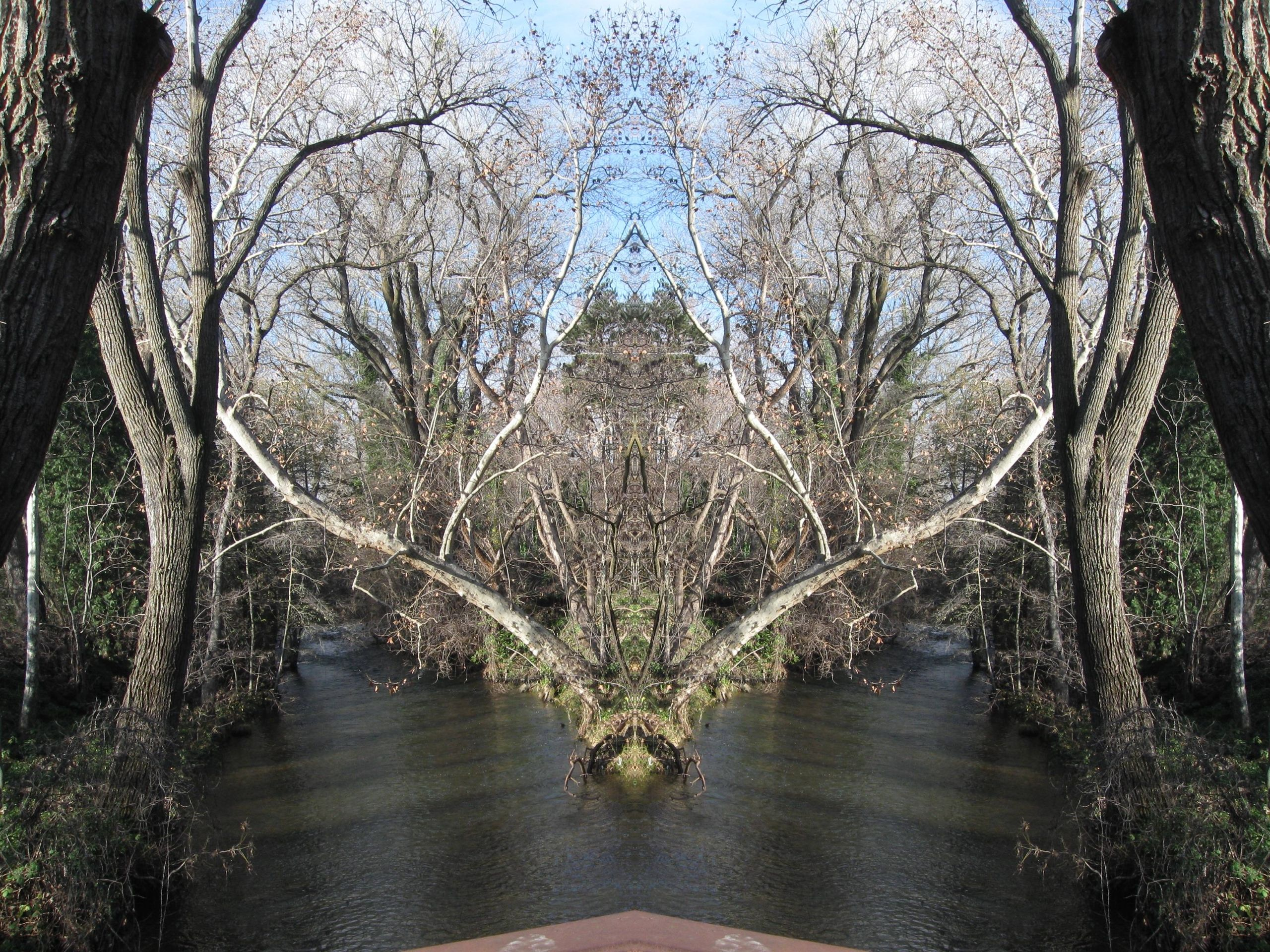 The Sagging Sycamore Dragon of Little Chico Creek in full Pareidolia mode with eyes a great illusion of (super)Natural f...