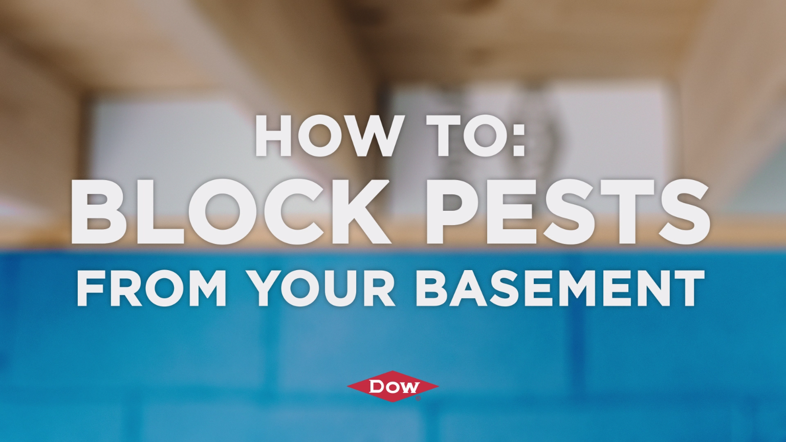Learn how you can block pests out from your basement using