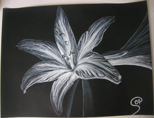 Lys blanc r alis au pastel sur papier canson noir 160g m - Dessin de fleur en noir et blanc ...