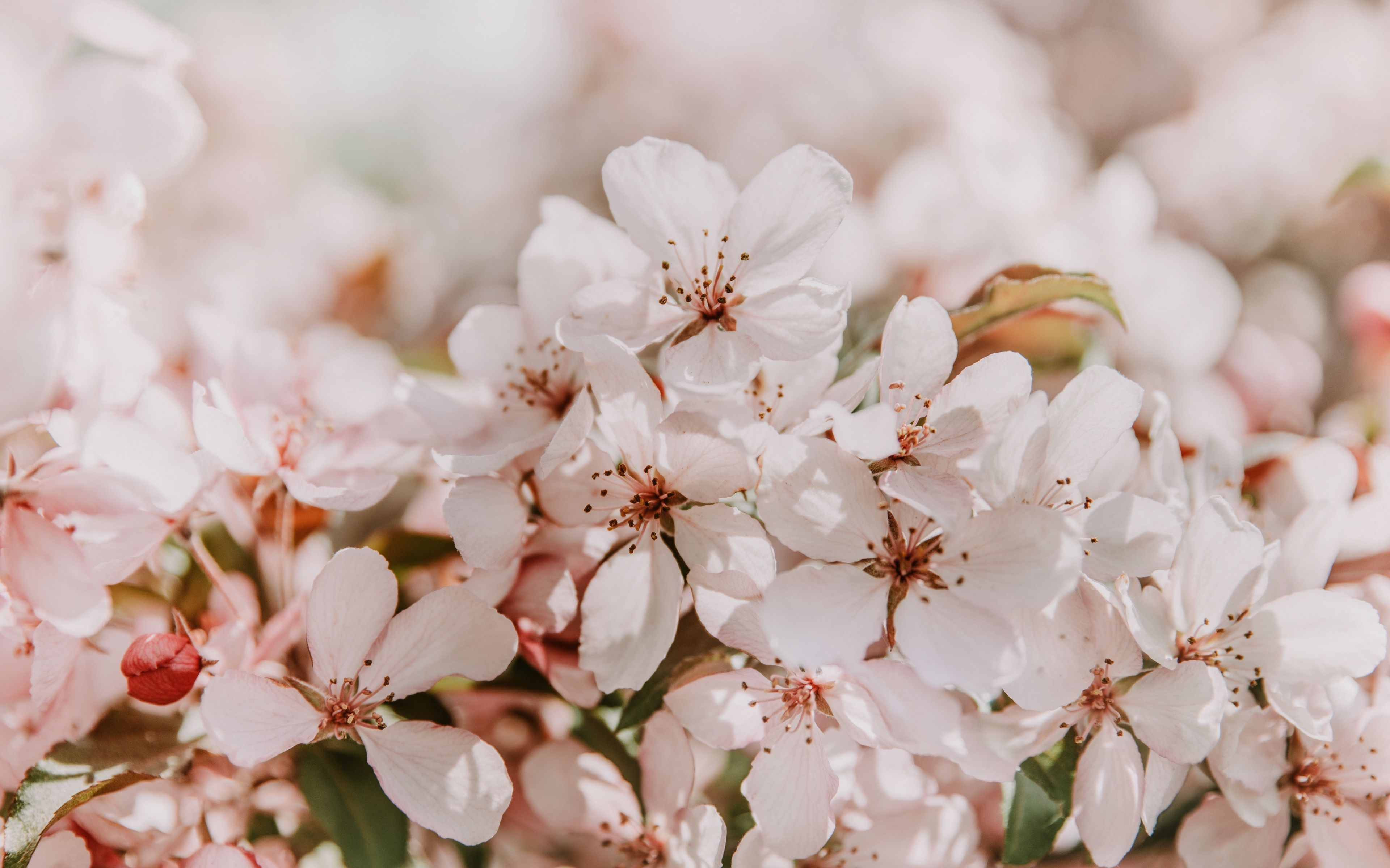 Spring Flowers Wallpaper Spring Flowers Wallpaper Hd Flower Wallpaper Flowers Photography Wallpaper
