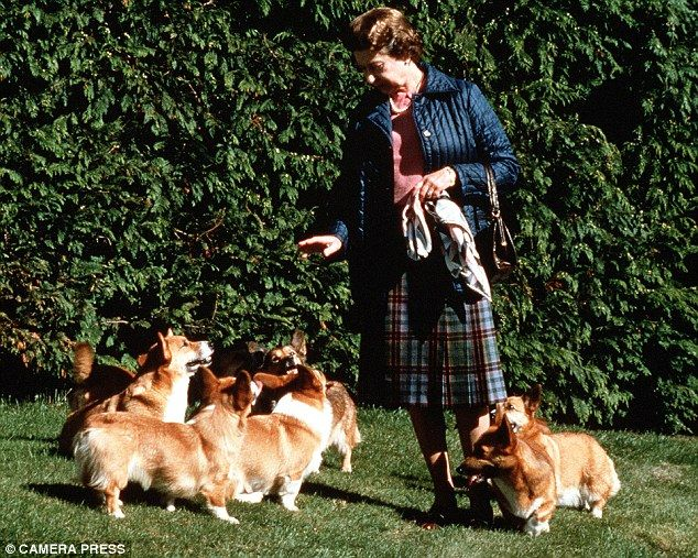 Her Majesty The Corgi Whisperer Californian Cowboy Who Became A
