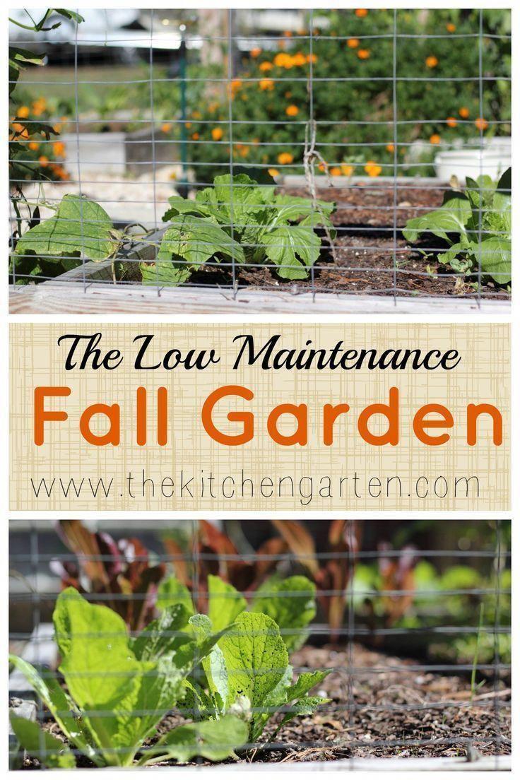 Low Maintenance Fall Vegetable Garden - The Kitchen Garten