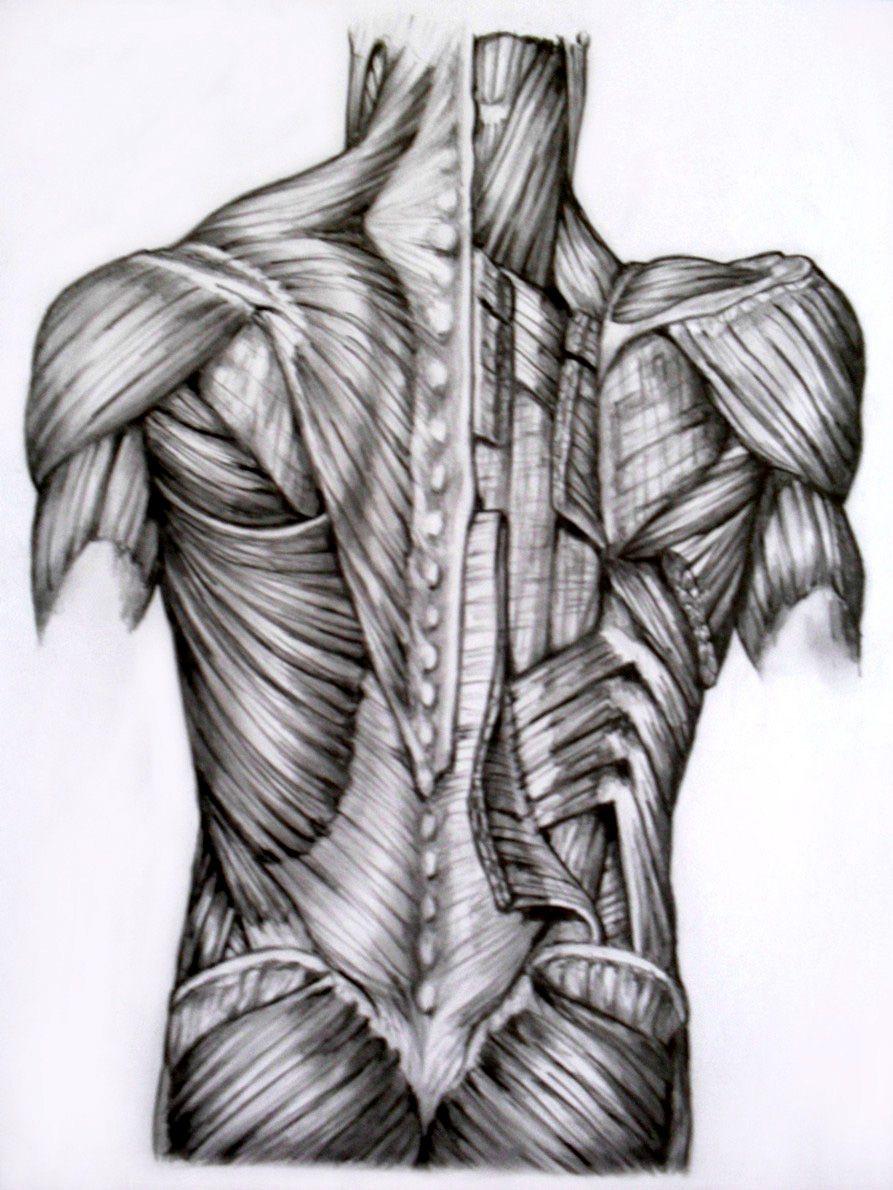 Картинка спинных мышц