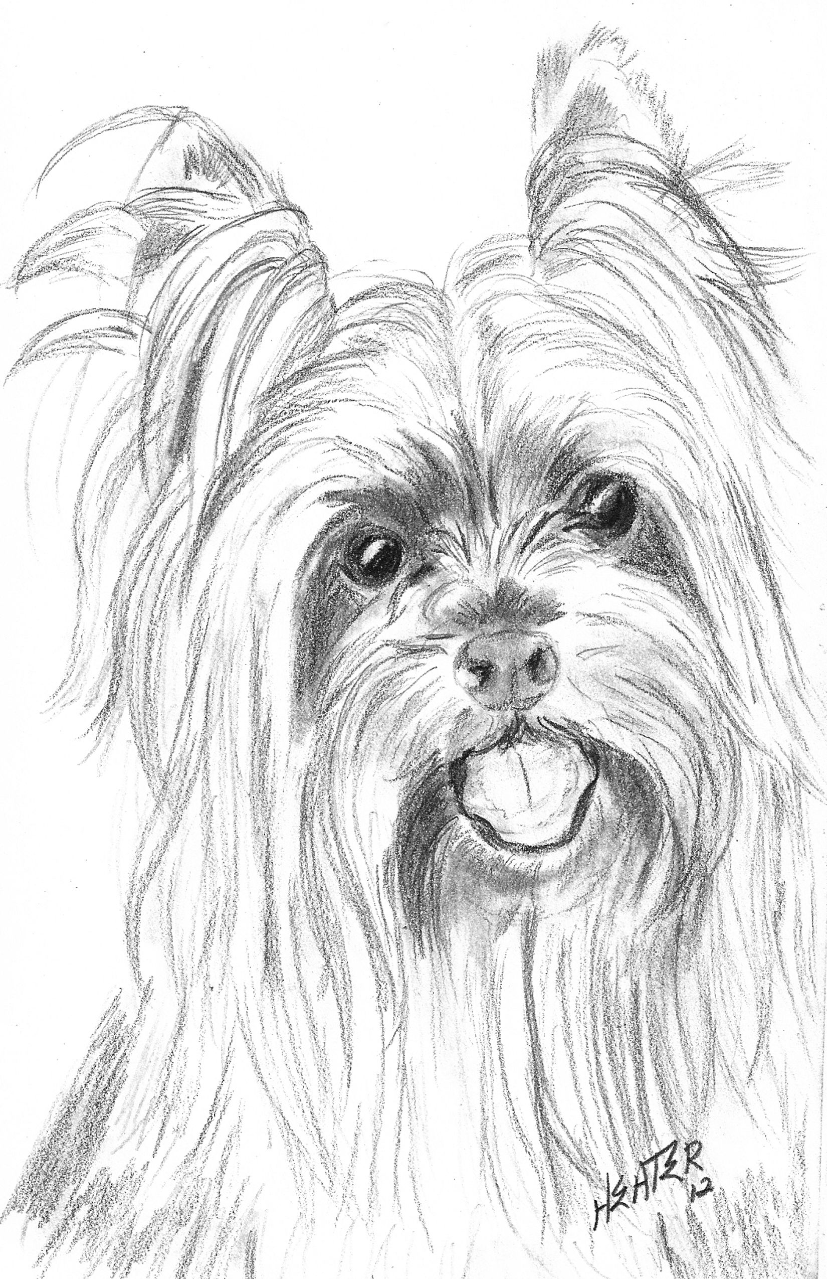 Yorkie Drawings May Drawing Challenge Please Click