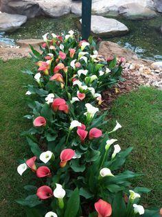 Plantas Ideais Para Sol Pleno Flores Cultura Mix