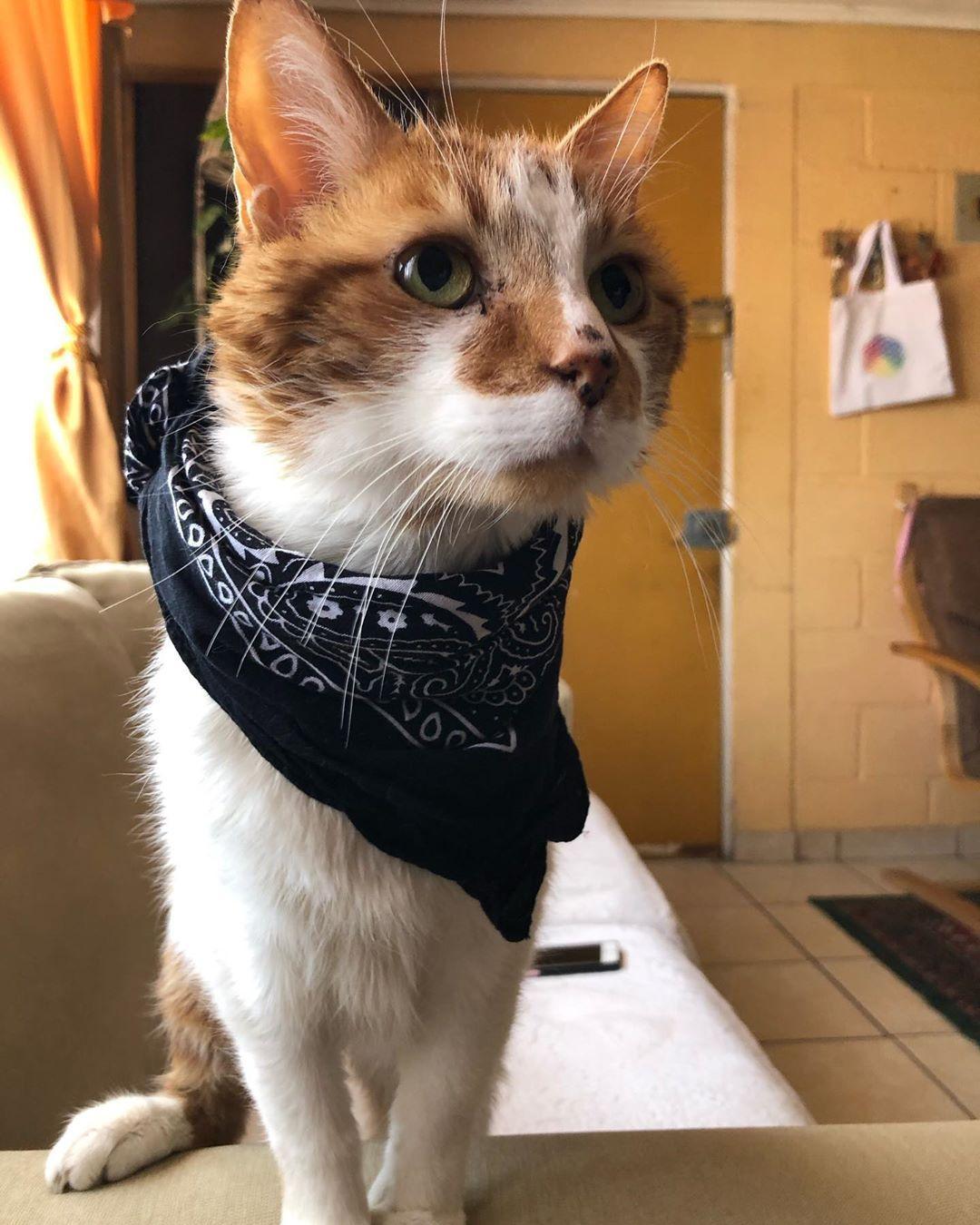El Rusio Mata Pacos No Muy Comodo Pero Queria Ser Parte Cat Day Funny Cat Videos Cats