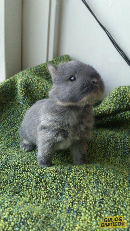 hermelin baby