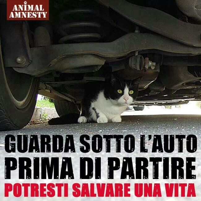 Pls check under your car before driving off, cats might be under the car, hiding from the cold, rain, snow.