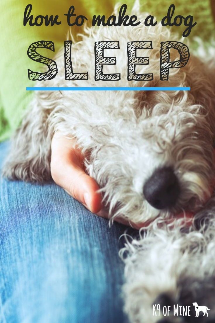 How To Make A Dog Sleep Getting Your Pup To Snooze! Do