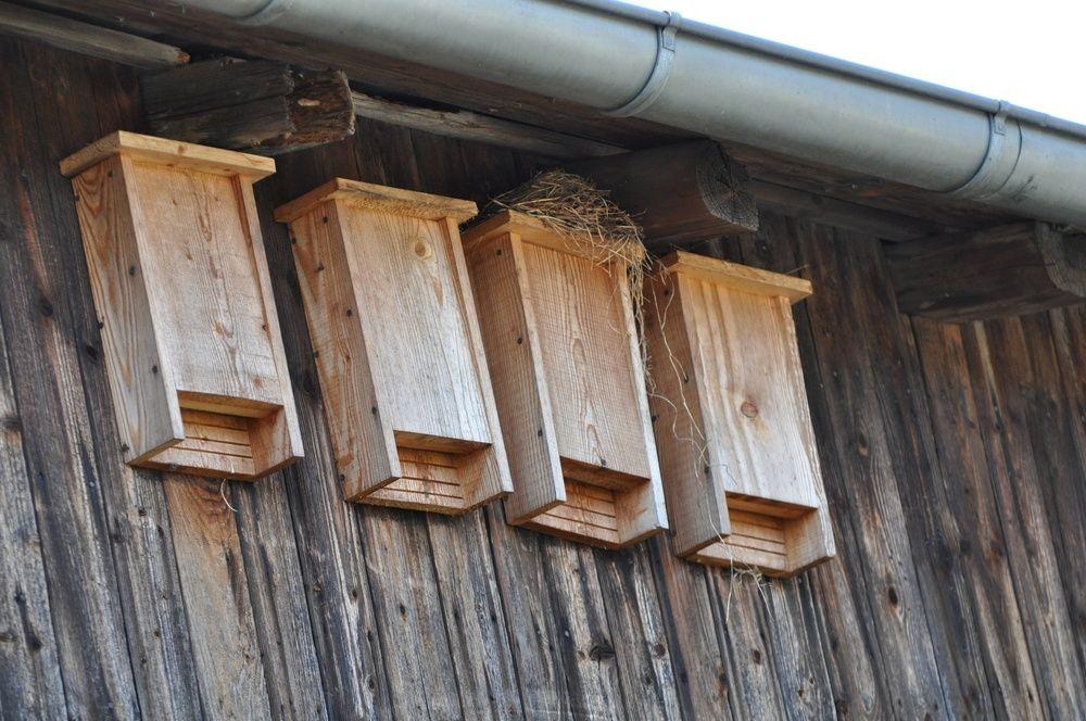 Bat boxes on the house bat houses bat box bat