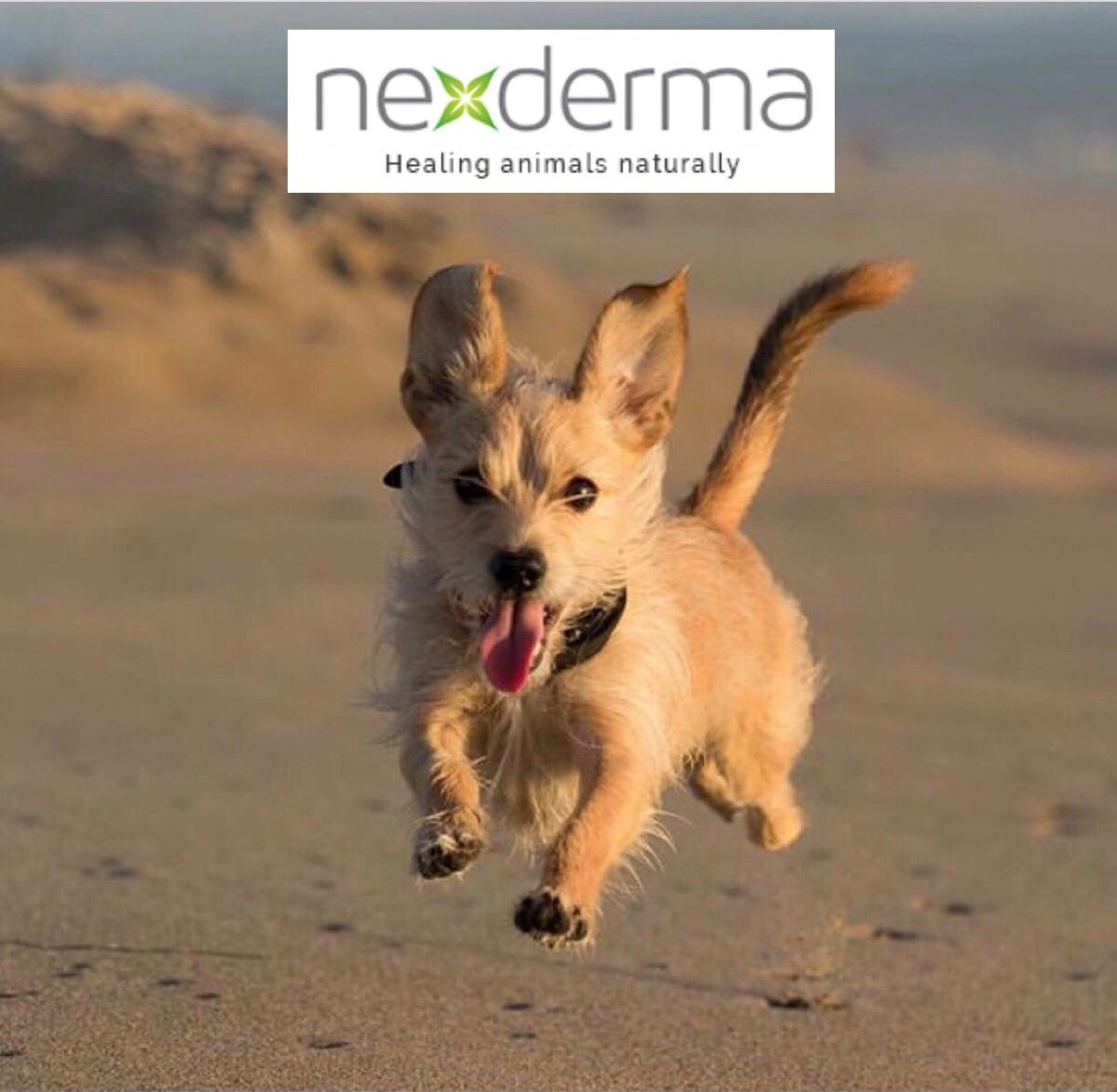 This guy is living his best life after using Nexderma