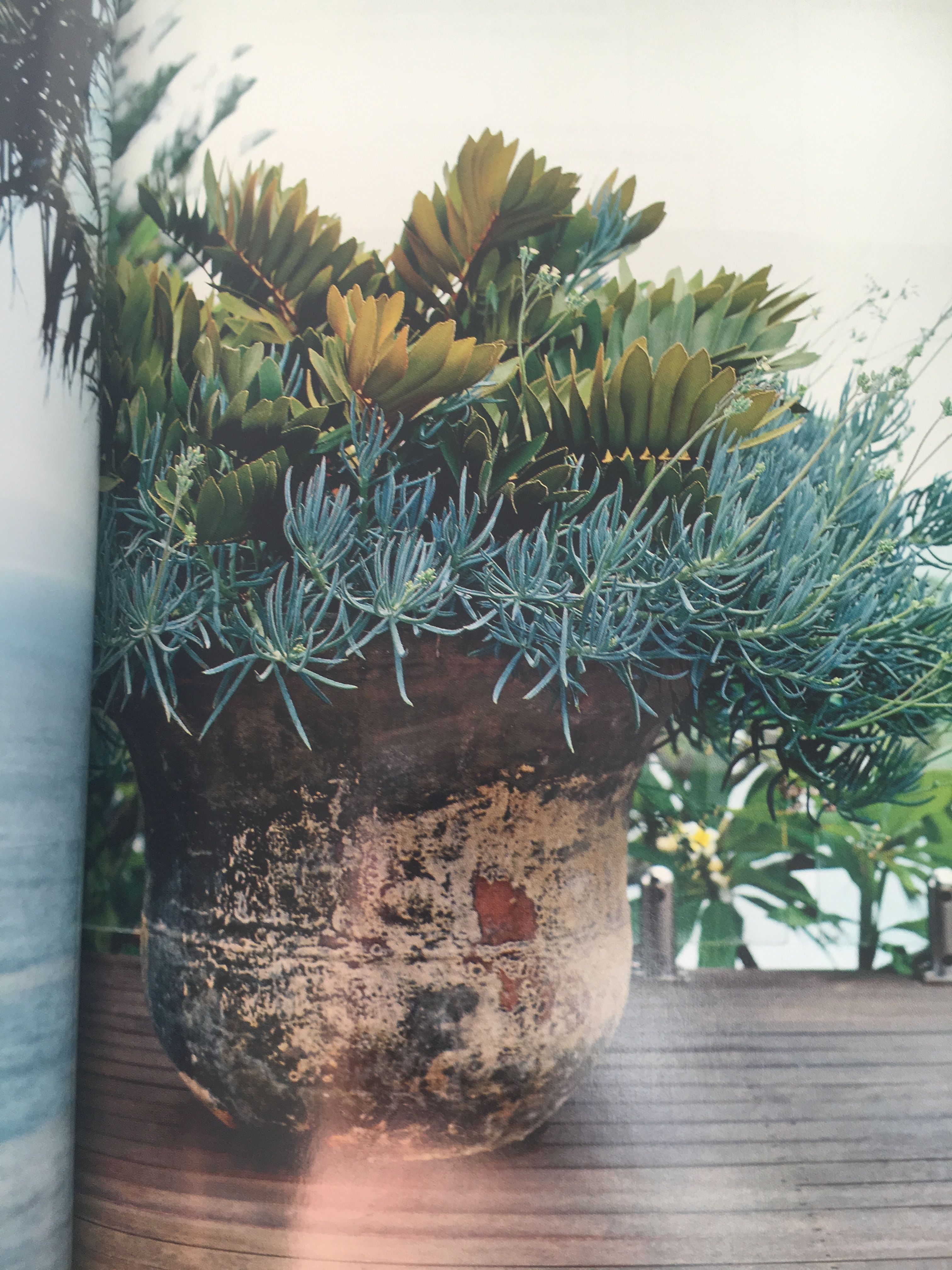 Pin By Jzhonnie Bechet On Pots Plants