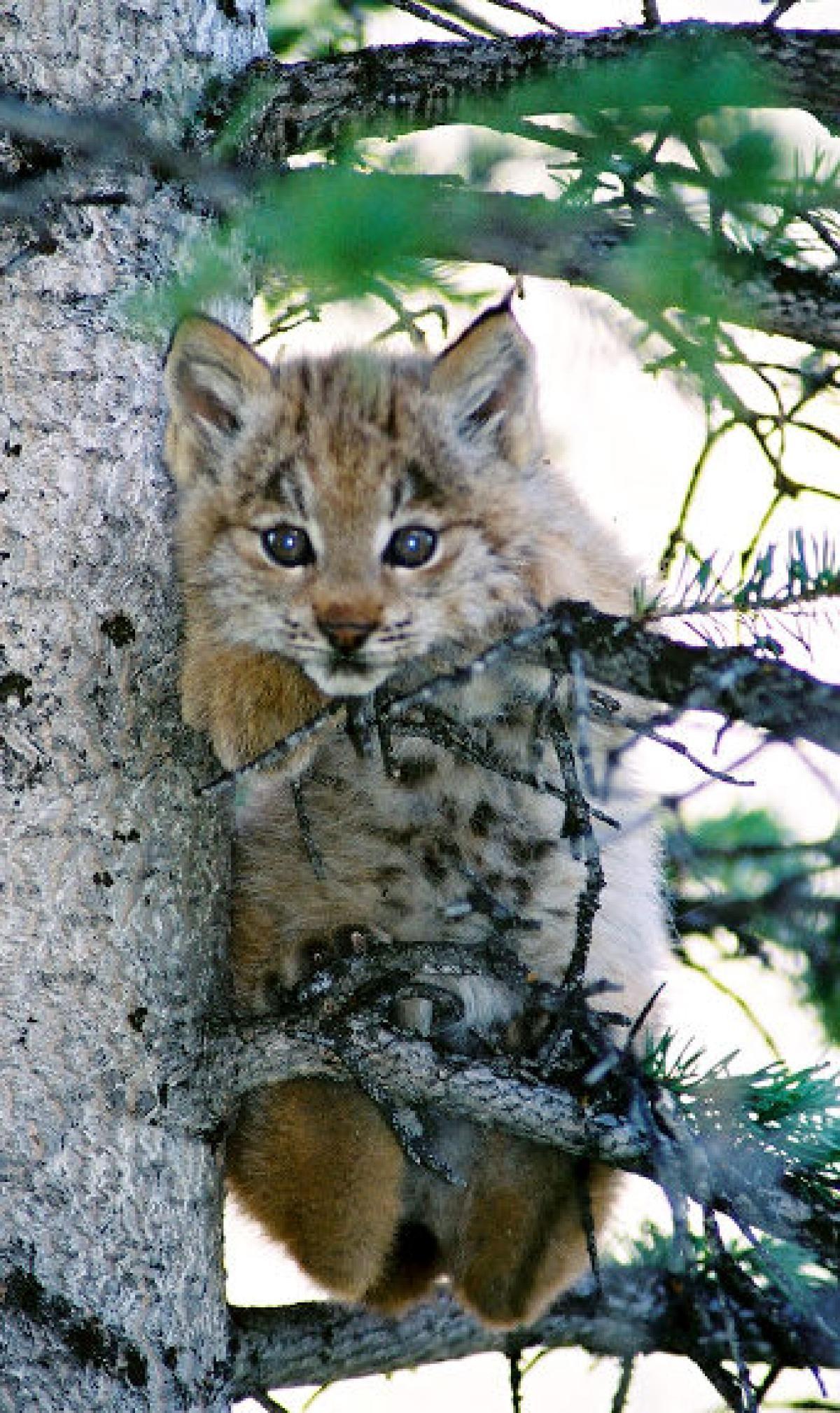 Endangered species Animals on the brink of extinction