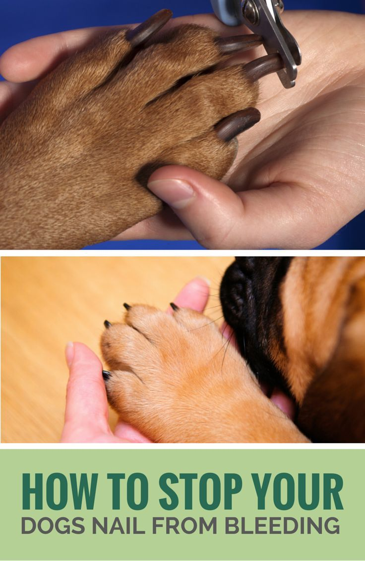 5 Ways To Stop Your Dogs Nail From Bleeding Puppy Leaks Dog Nails Dog Nail Bleeding Trimming Dog Nails