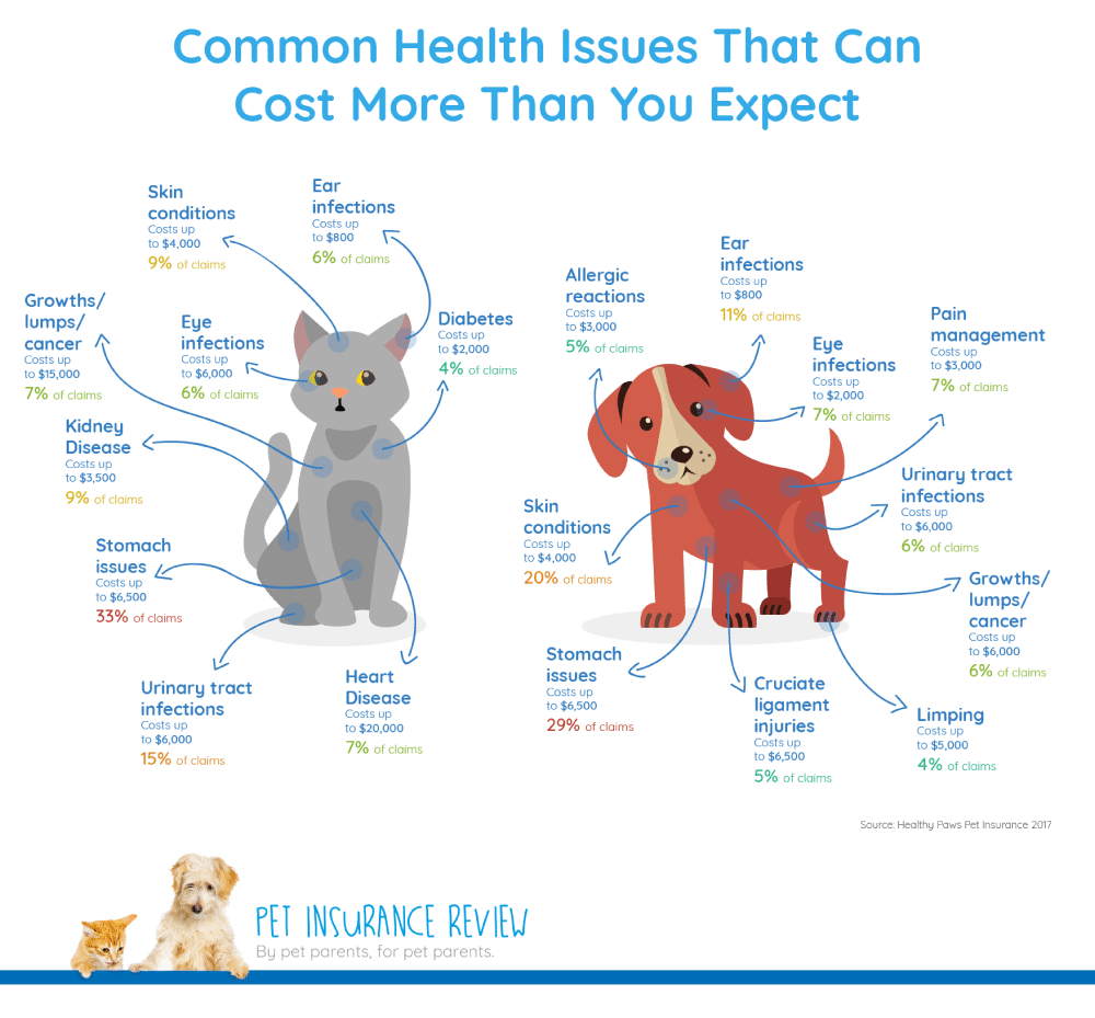There S No Denying It Pets Are Expensive When You Make The Decision To Adopt A Pet You Need To Answer Pet Insurance Cost Pet Insurance Pet Insurance Reviews