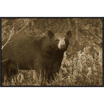"East Urban Home 'Black Bear Portrait' Framed Photographic Print on Canvas Size: 20"" H x 30"" W x 1.5"" D"
