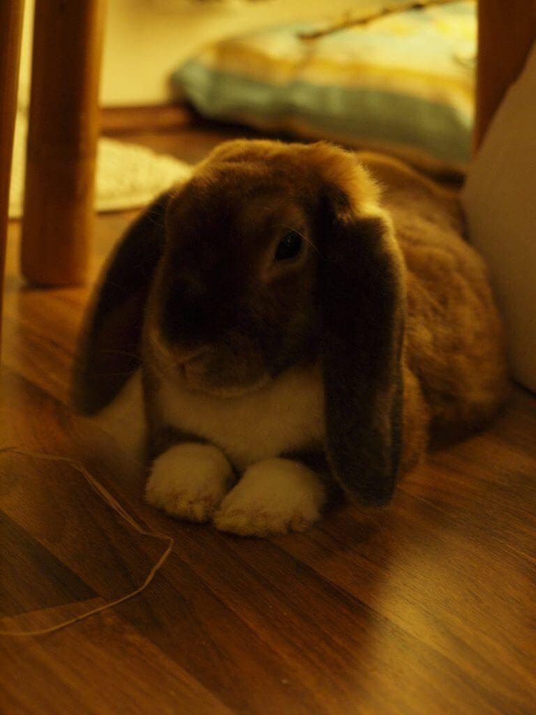 Kaninchenstall Selber Bauen Bauanleitung Fur Die Wohnung Kaninchenstall Selber Bauen Kaninchenstall Kaninchen