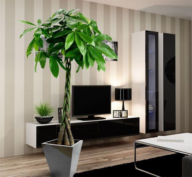 pachira ch taignier de guyane plante baobab culture soins et conseils jardins potager and. Black Bedroom Furniture Sets. Home Design Ideas