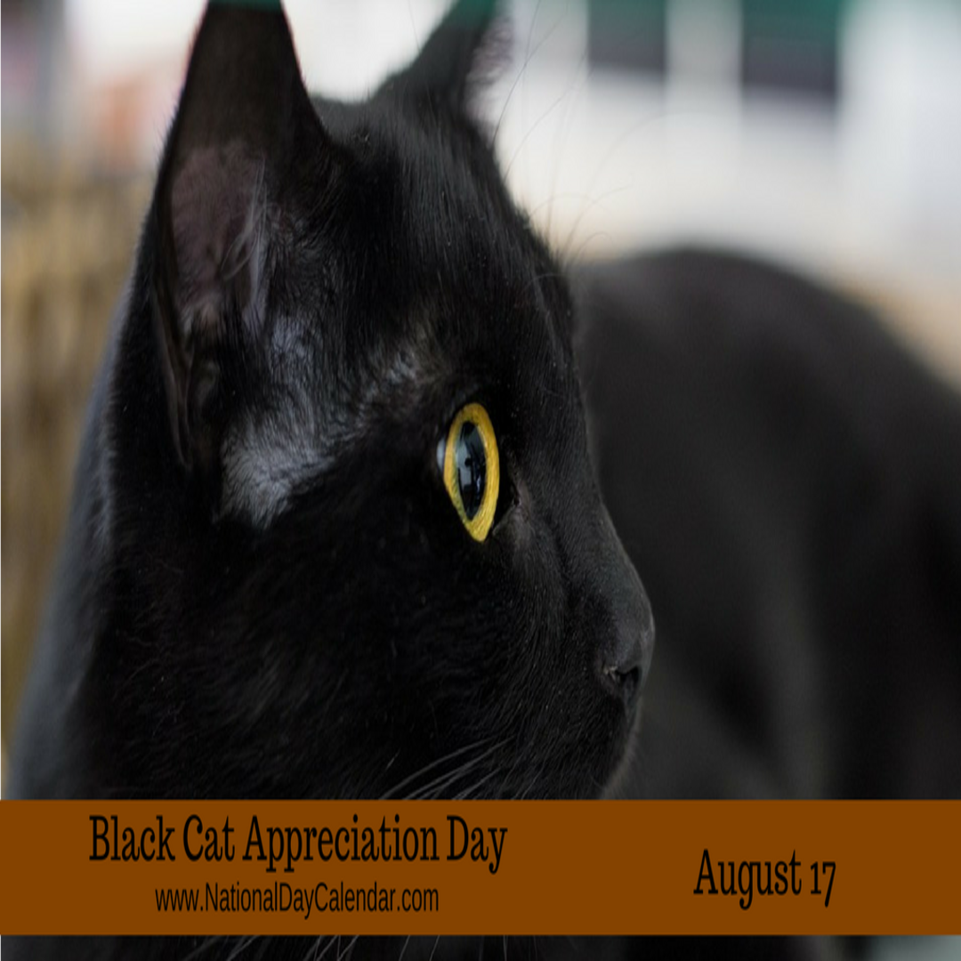 Black Cat Appreciation Day Today Shouldn T Be Confused With National Black Cat Day And Superst Black Cat Appreciation Day Black Cat Day National Black Cat Day