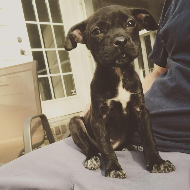Adopt Paisley on Pet adoption, Dogs, Pets