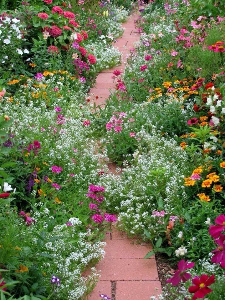Sweet Alyssum spilling onto a path Gardening Pinterest
