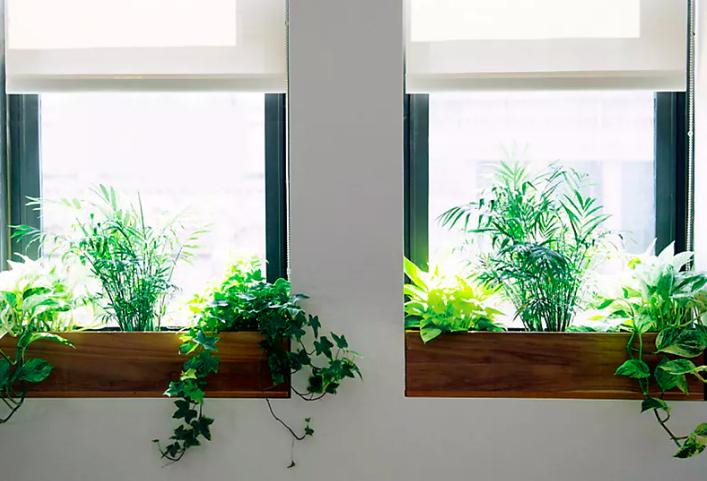 Windowsill Garden For The Home Pinterest Window Sill Indoor