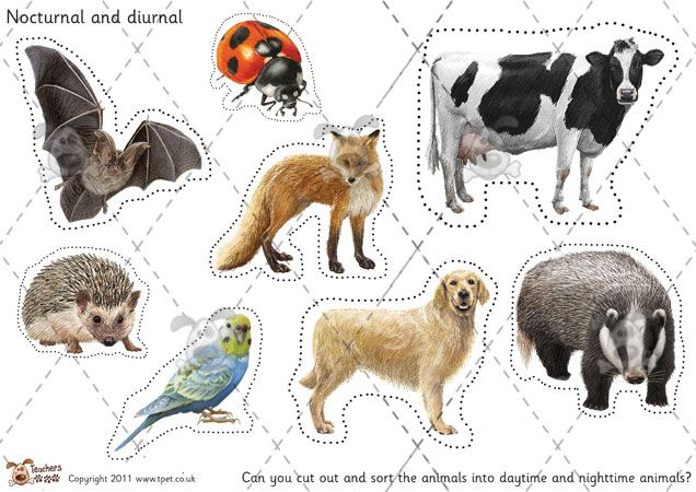 nocturnal animals and diurnal animals - Clip Art Library