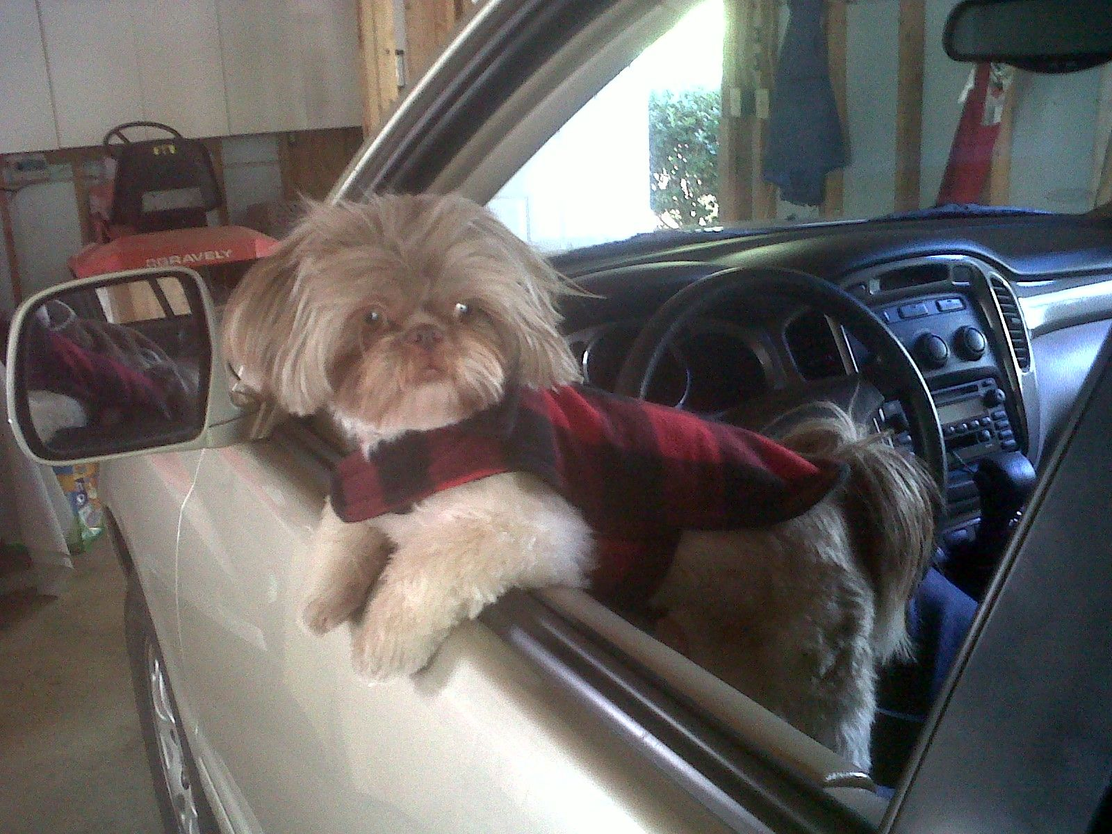 When Are We Leaving Daddy Shih Tzu Shih Tzus Funny Animal