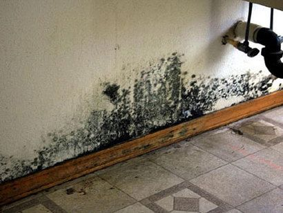 Mold testing equipment | The mold removal | Mildew remover